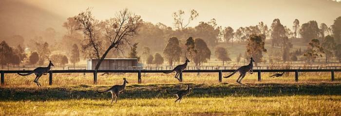 transport animalier Australie