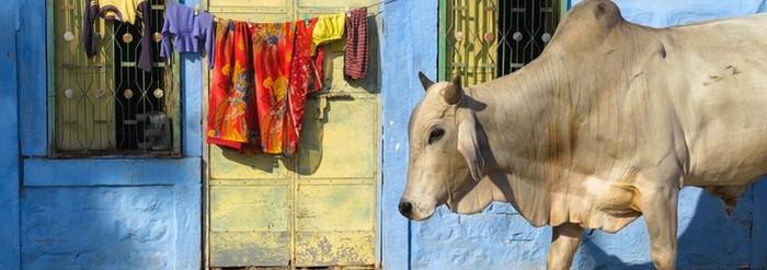 Transport animalier Inde