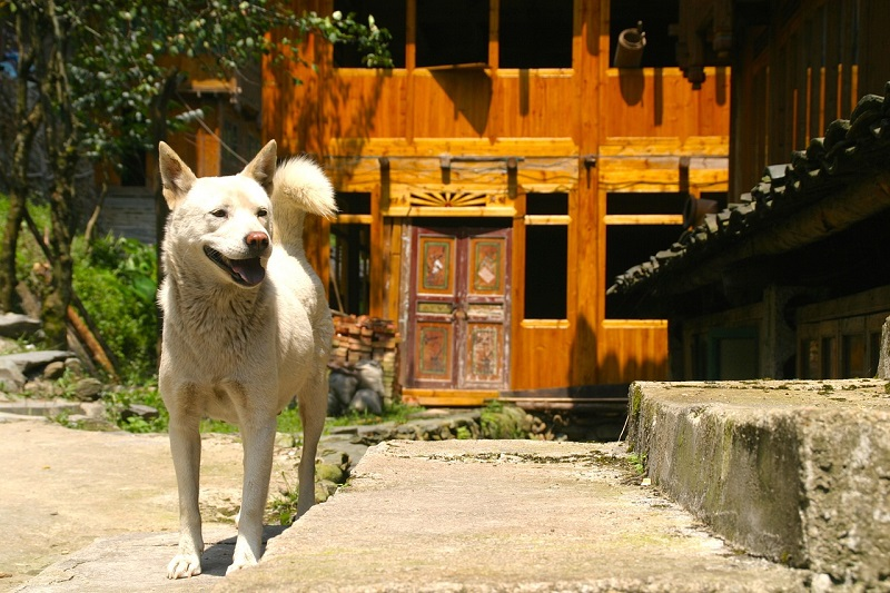 Pet relocation to taiwan dog shipping