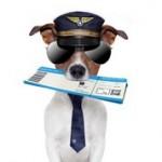 Transport Animalier par Avion