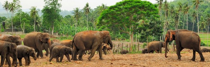 TRANSPORT ANIMAUX SRI LANKA