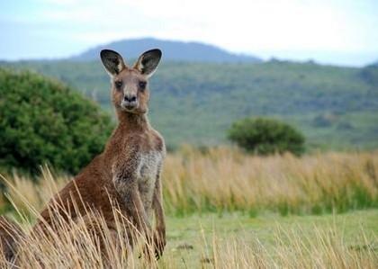 Transport animaux Australie - Melbourne - Sydney