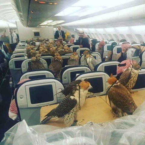 http://www.airtransportanimal.com/wp-content/uploads/2017/02/faucons.jpg