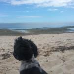 chien envoi avion fret nouvelle caledonie