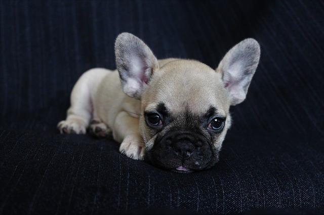Attention aux arnaques de vente de chiens sur internet