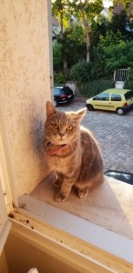 Chat NALA-P Legris